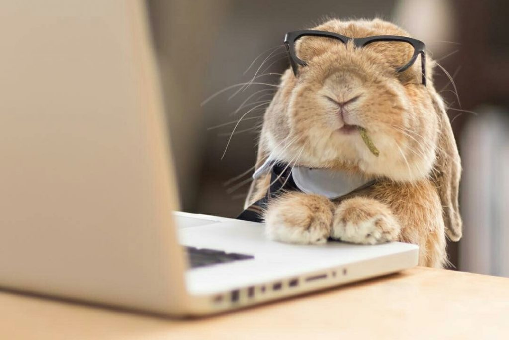 tech_support_bunny